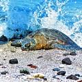 Hawaiian Green Turtle Honu by Daniel Mazzei
