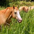 Hawaiian Horses In Sugar Cane by Marie Hicks