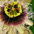 Hawaiian Lilikoi by James Temple