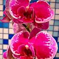 Hawaiian Orchid 1 by Randall Weidner