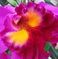 Hawaiian Orchid 2 by Randall Weidner