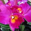 Hawaiian Orchid 3 by Randall Weidner