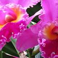 Hawaiian Orchid 6 by Randall Weidner