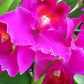 Hawaiian Orchid 8 by Randall Weidner