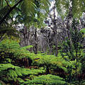 Hawaiian Rainforest by Greg Vaughn - Printscapes