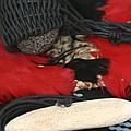 Hawaiian Sling Stone Wailea by Sharon Mau