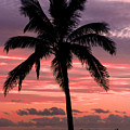 Hawaiian Sunset With Coconut Palm Tree by Pierre Leclerc Photography