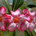 Hawaiian Flowers by Alynne Landers