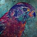 Hawk by Artful Oasis