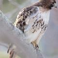 Hawk Eye by Bill Zajac