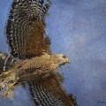 Hawk In Flight by Nancy Germer