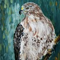 Hawk by Maria Langgle