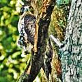 Hawk On Blue Hole Road by Chad Fuller