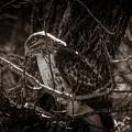 Hawk by Sunshine Nelson