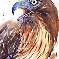 Hawk Watercolor by Suzann Sines