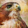 Hawk Wc by Joye Ardyn Durham