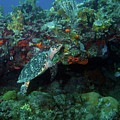 Hawksbill Sea Turtle 4 by Pauline Walsh Jacobson
