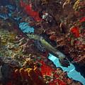 Hawksbill Sea Turtle 9 by Pauline Walsh Jacobson