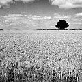 Hawksmoor by John Edwards