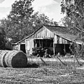 Hay And The Old Barn - Bw by Michael Thomas
