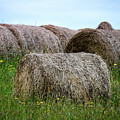 Hay Bales Among The Wildflowrs by Donna Lee