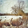 Hay Bales In Snow by Melissa D Johnston