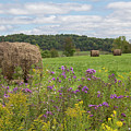Hay Bales In Summer  by Rebecca Hazen