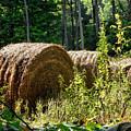 Hay Bay Rolls by Jeelan Clark