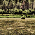 Hay Harvest by David Patterson