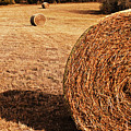 Hay In The Field by Tamyra Ayles