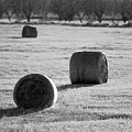 Hay Is For Horses by Jill Reger