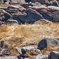 Hay Ocean Rocks by Carl Therriault