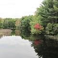 Haybrook Maine Foliage 6 by Lynne Miller