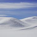 Hayden Valley Winter by Jack Bell