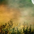 Haze On Moonlit Meadow by RC deWinter