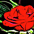 hdr 263 - Red Red Rose  by Chris Berry