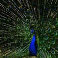 He Is The King by Susanne Van Hulst