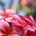 He Pua Lahaole Ulu Wehi Aloha by Sharon Mau