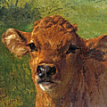 Head Of A Calf by Rosa Bonheur