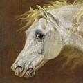 Head Of A Grey Arabian Horse  by Martin Theodore Ward