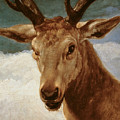 Head Of A Stag by Diego Rodriguez de Silva y Velazquez