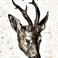 Head Of A Stag Digital Art by Karla Beatty