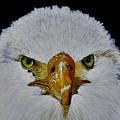 Head Of An Eagle  by Birgit Jentsch