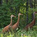 Headed For The Woods by Linda Kerkau