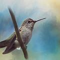 Hear Her Song - Hummingbird Art by Jordan Blackstone