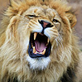 Hear Me Roar by Steve McKinzie