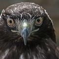 Hears Looking At You  by Duane Deboer