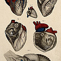 Heart, Anatomical Illustration, 1822 by Wellcome Images