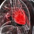 Heart Anatomy, Artwork by Sciepro