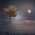 Heart In Far Light by Scott Mendell